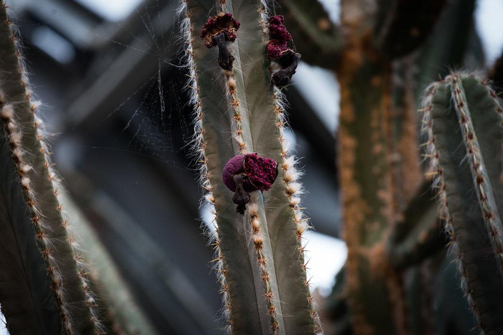 Kaktus-Bluete.jpg