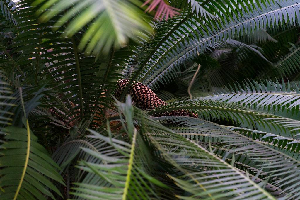 Palmen-Pimmel.jpg