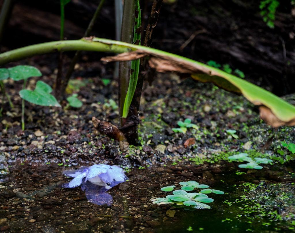 Bluete-Wasser.jpg