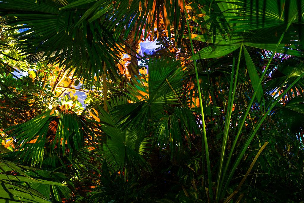 Pflanzen-beleuchtet-orange.jpg