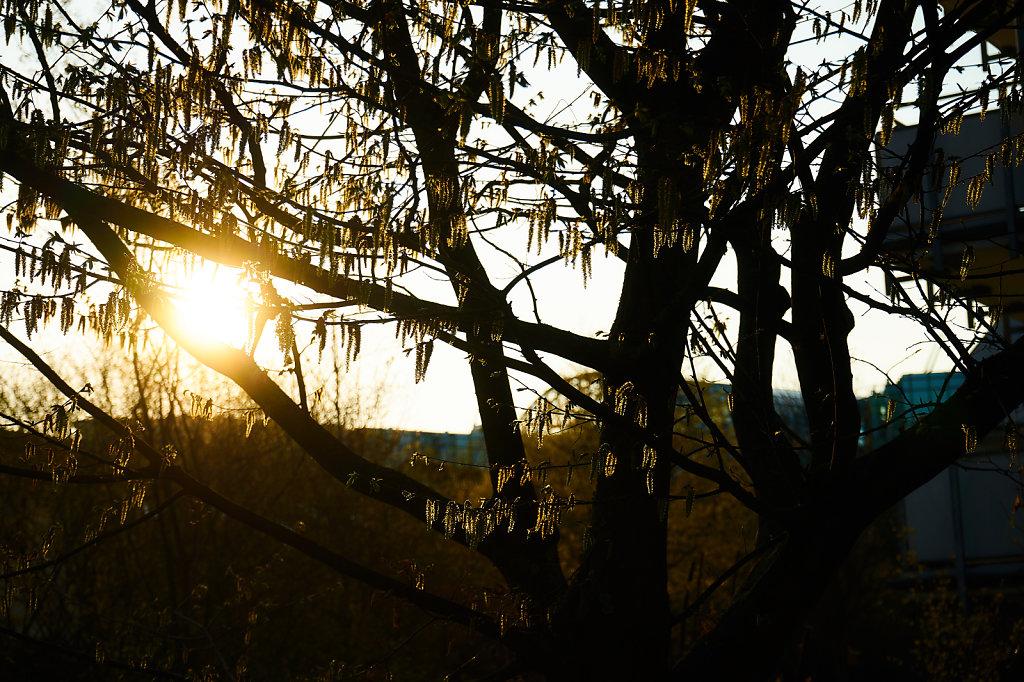 Sonnenbaum.jpg